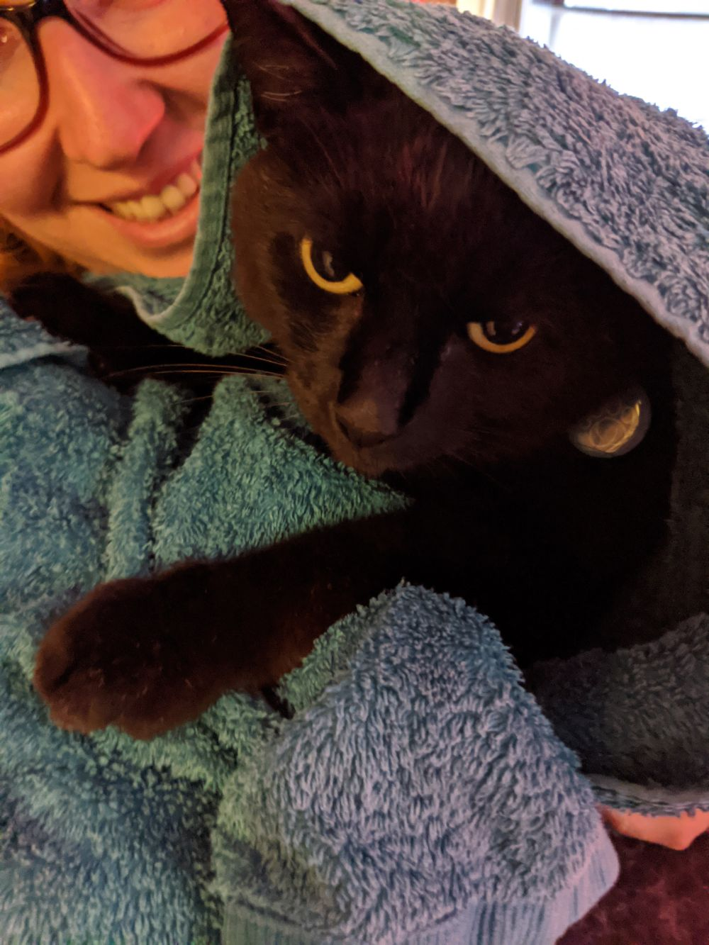 Black cat wrapped up in a blue blanket, being held by Anna, sitting up and meowing at the camera, looking a little annoyed, but not annoyed enough to jump out of Anna's arms