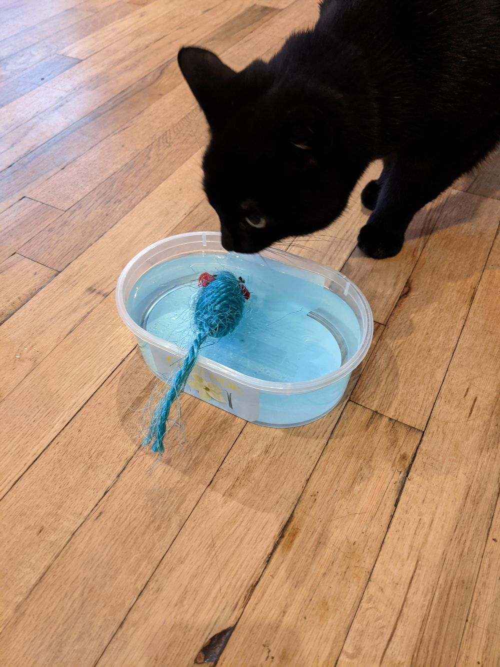 Black cat sniffing at his water bowl, in which a blue toy mouse is drowning