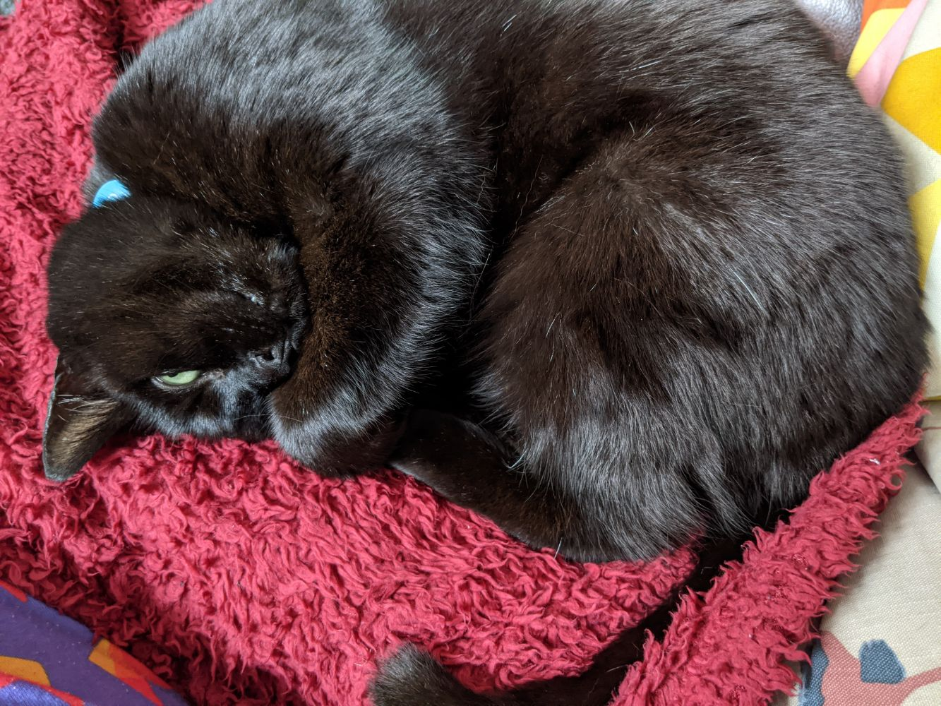 Black cat lying on a red blanket on his side, all curled up, with one eye visible
