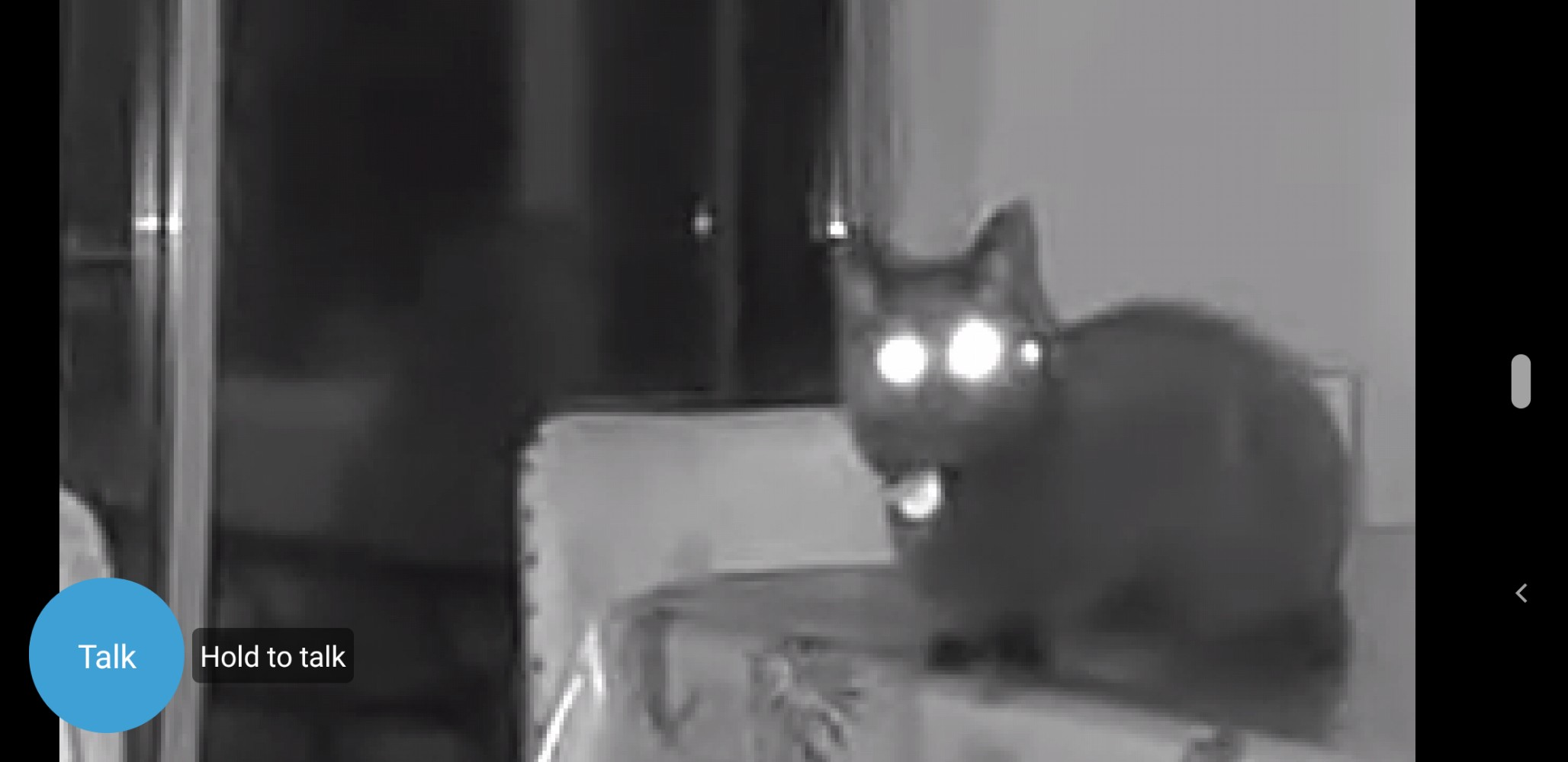 Screenshot of security camera app with night vision setting showing black cat, Morph, who is looking at the camera with glowing white eyes, looking quite spooky