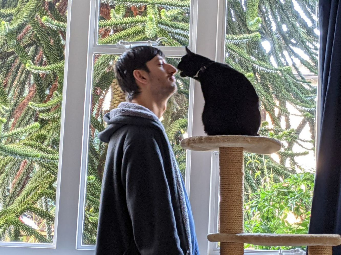 Jamie standing next to a cat tower with a black cat, Morph, sitting on top of it, reaching over to Jamie while trying to bite his nose, while Jamie looks at him calmly, slightly leaning back to avoid his nom