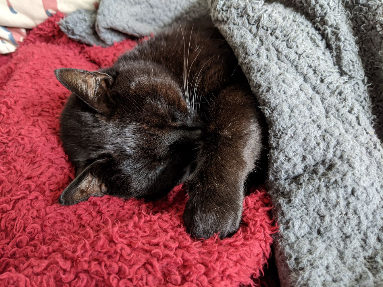 Black cat flopped on his side, asleep, with one paw stretched over him