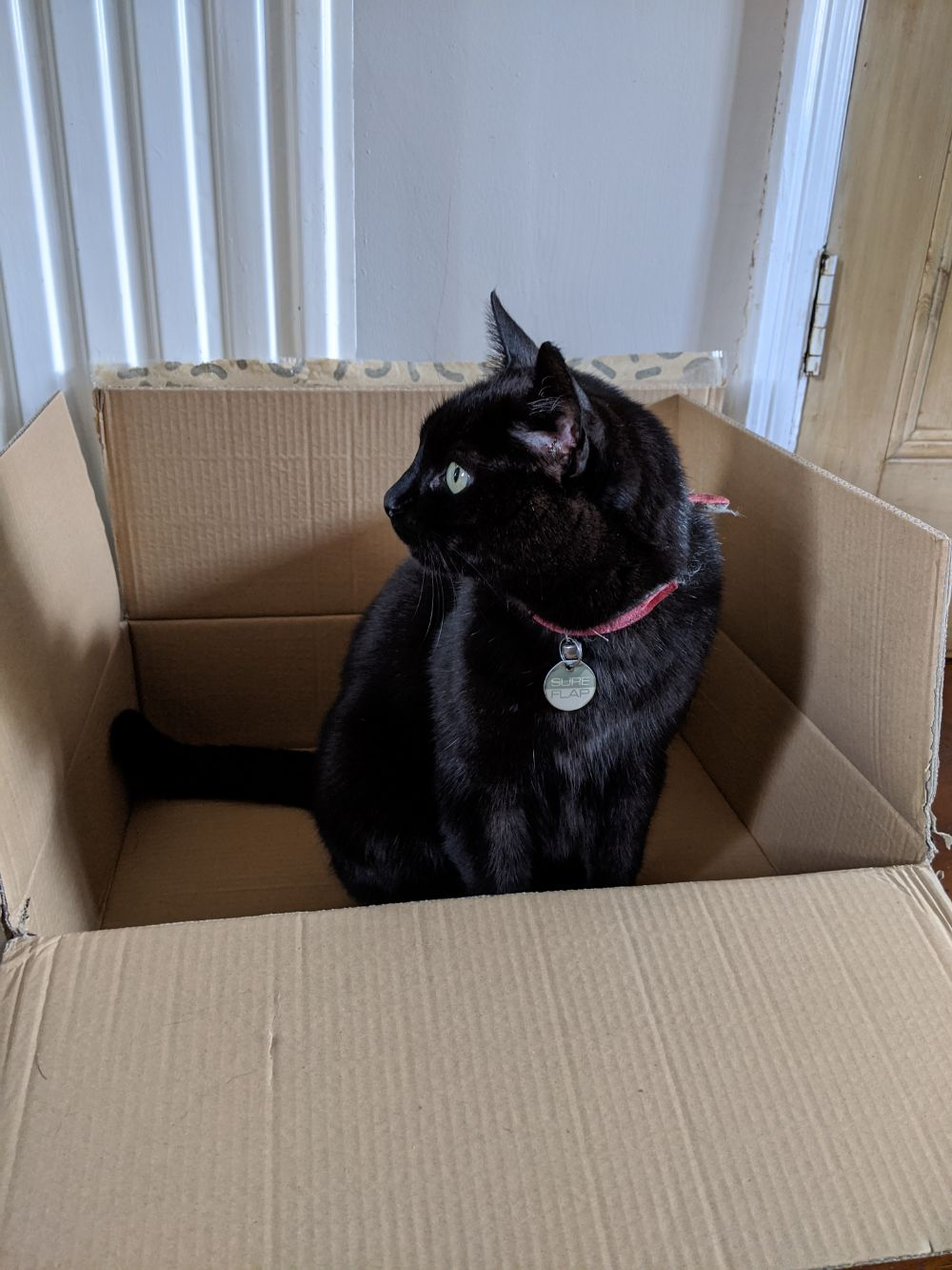 Black cat sitting in a box, looking away from the camera