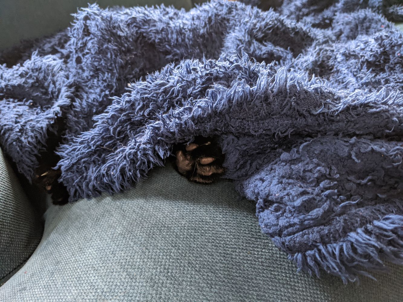 A blue blanket on a blue sofa, with two paws from a black cat (Morph) peeking out, but the rest of him fully under the blanket