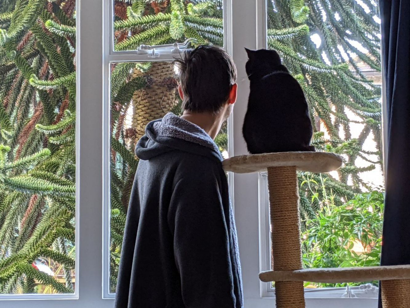 Jamie standing next to a cat tower with a black cat, Morph, sitting on top of it, looking out the living room window together, trying to see if there are any birds behind our monkey puzzle tree
