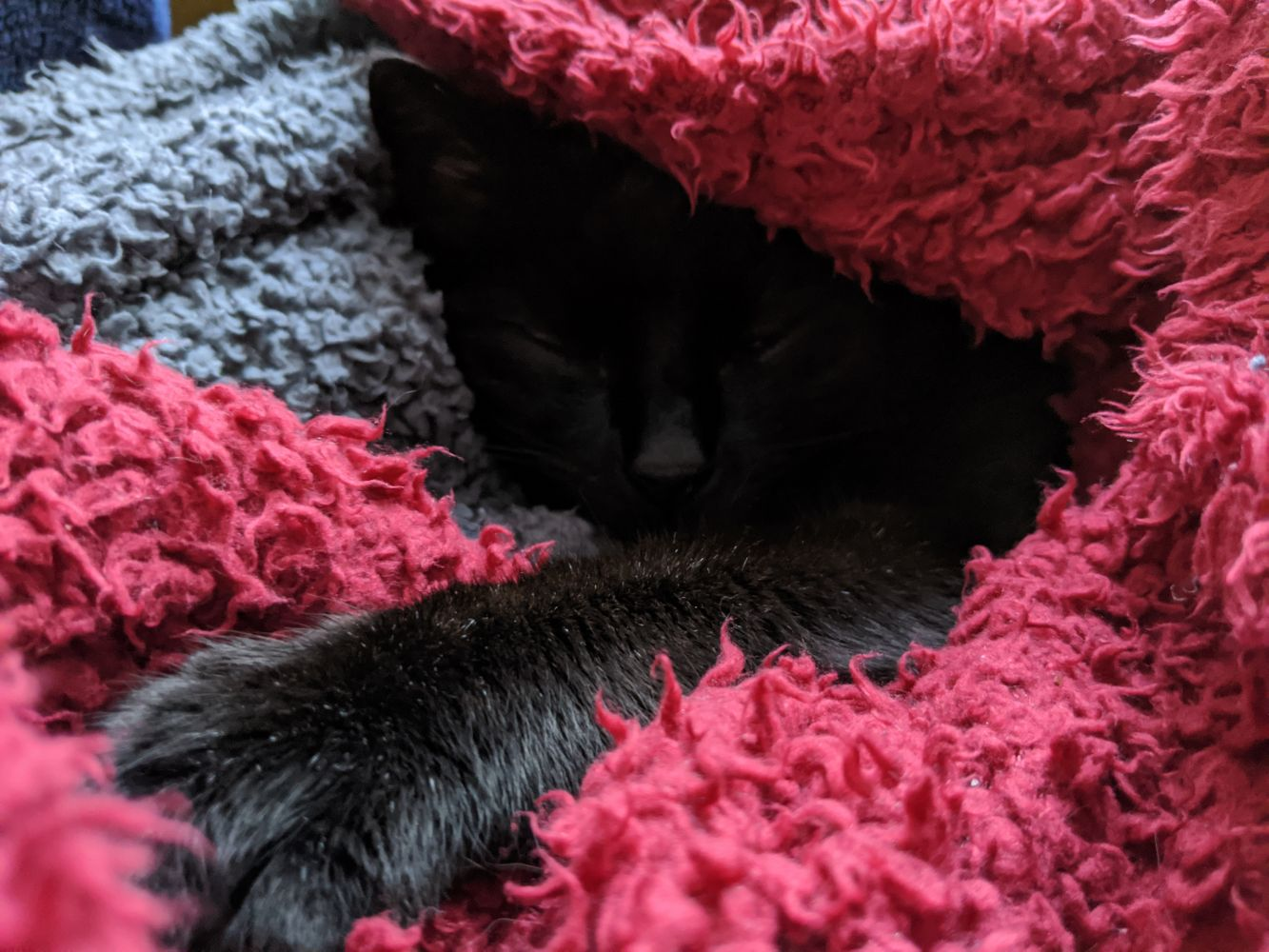 Black cat, with his face barely visible, nestled in a little cave under a red blanket, with his arm outstretched