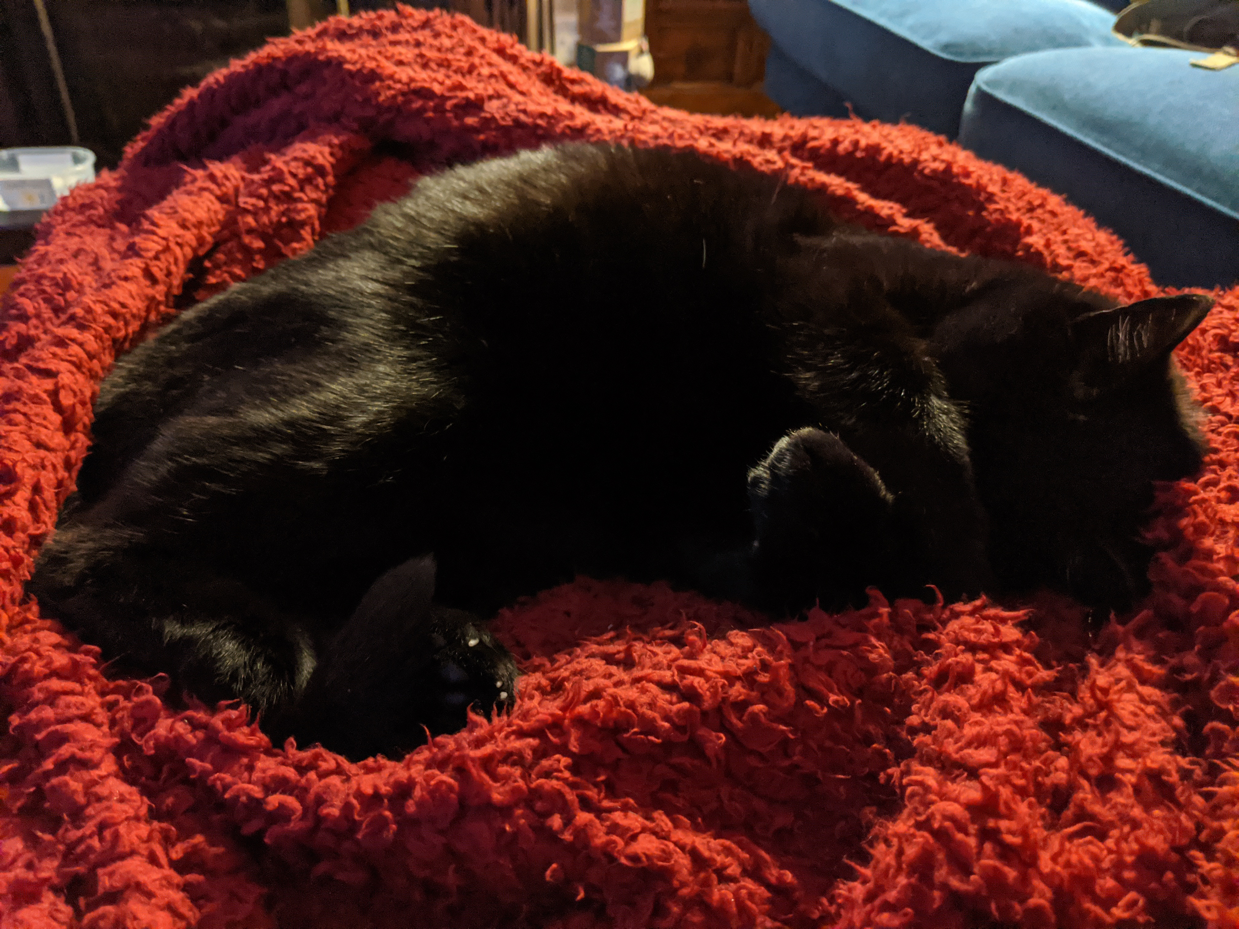Black cat lying on a footstool, partially wrapped in a red blanket, with his paws held up over his eyes as it's a bit too bright
