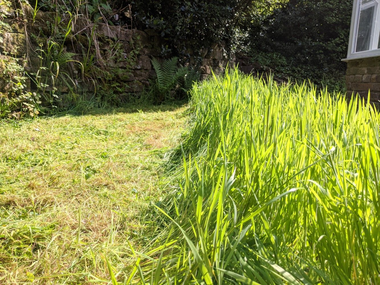 A side-by-side photo of the freshly mown lawn, showing a very stark contrast between the freshly mown grass, and the very tall grass that has not yet been mown, taken from a lower angle to show the height of the grass before mowing