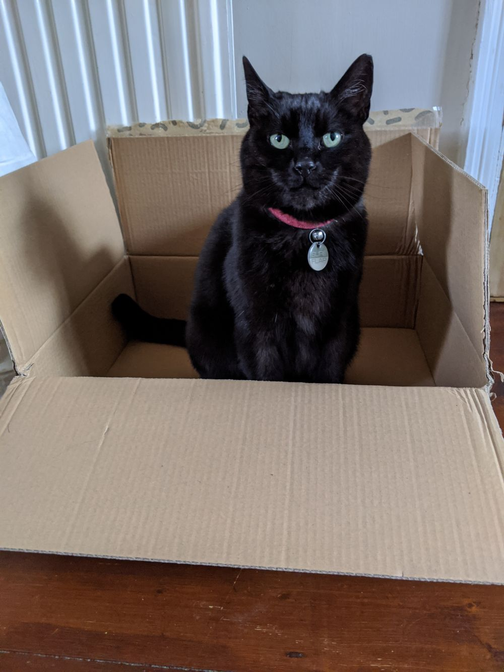 Black cat sitting in a box, looking at the camera