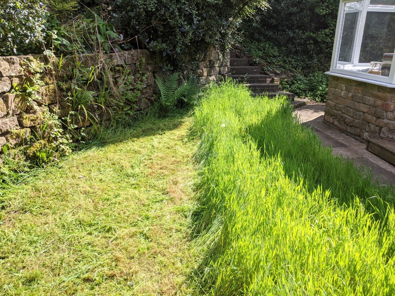 A side-by-side photo of the freshly mown lawn, showing a very stark contrast between the freshly mown grass, and the very tall grass that has not yet been mown