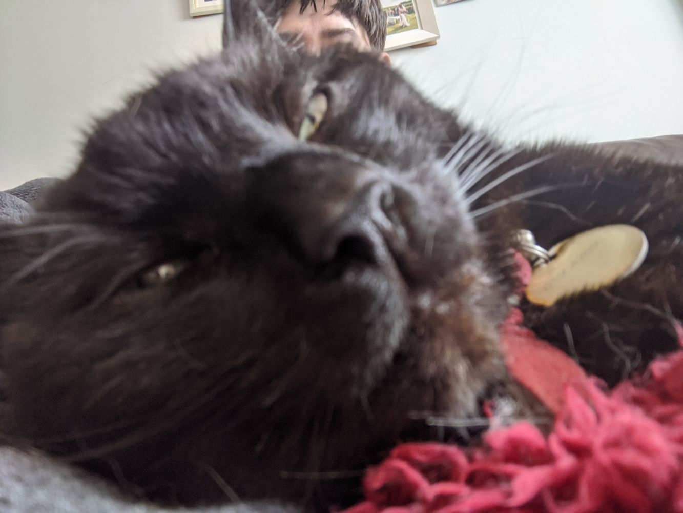 Black cat in the foreground, slightly blurry, as it is an intentionally bad selfie, with just the top of Jamie's head visible above Morph's